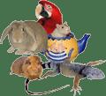 Animal,-bird,-reptile-,meta4u
